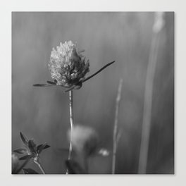 Clover black and white Canvas Print