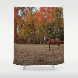 Where is My Horse Hay? Shower Curtain
