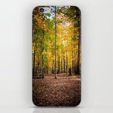 Autumn Walk iPhone & iPod Skin