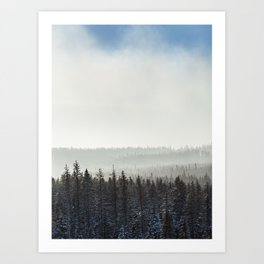 Tree Line on a Forestry Site Art Print