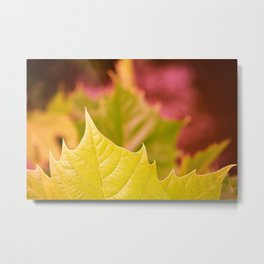 Golden Olive Sycamore Leaf Metal Print