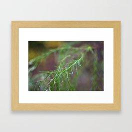 Dew Branch Framed Art Print