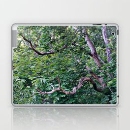 An Old Branch Laptop & iPad Skin