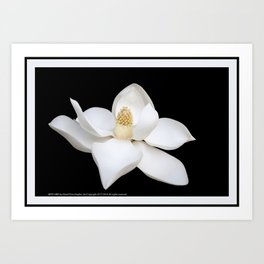 """HOME DECOR,""""Wake Up and Smell the Lilies"""",Black,White,Pillows,Wall Tapestries,ART prints,Wall Art Art Print"""