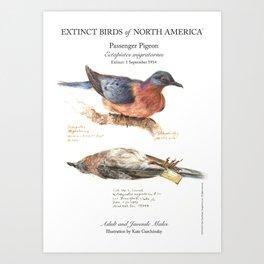 Extinct Birds: Passenger Pigeon Art Print