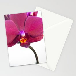 Orchid Flowers 06 Stationery Cards