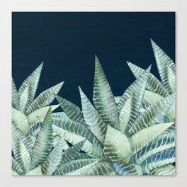 Succulent Garden (Snake Plant) Canvas Print