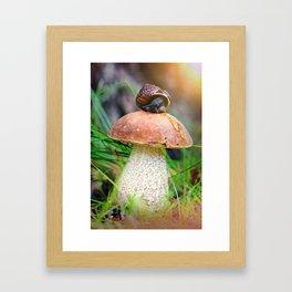 Leccinum on grass with snail Framed Art Print
