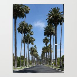 Tall California Palm Trees Photograph Poster