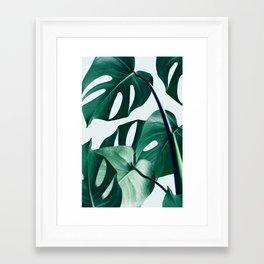 Monstera #society6 #artprints #buyart Framed Art Print
