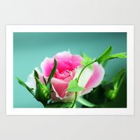 Rose before the beetles got it Art Print