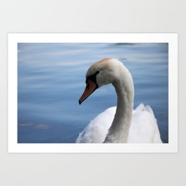 Colse up swan Art Print