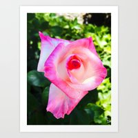 Pink & White, What a Double Delight! Art Print