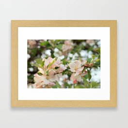 Apple Blossoms Framed Art Print
