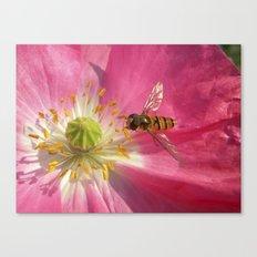 flower fly macro VII Canvas Print