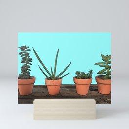 Succulents in Terracotta Mini Art Print