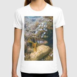 Painted Comber (Serranus scriba) Mediterranean Sea Underwater T-shirt