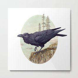 Raven of the North Atlantic Metal Print