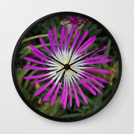 "Delosperma, ""Ice Plant"" Wall Clock"