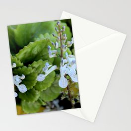 Two dollar flowers on my balcony Stationery Cards