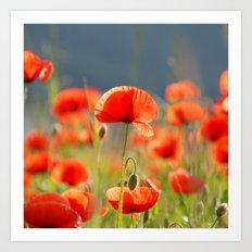 Red Poppies Flowers Art Print