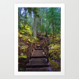 Giant Cedars Boardwalk in British Columbia, Canada Art Print