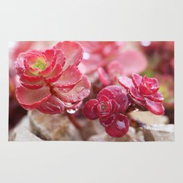 Succulent Garden Cactus Red Flowers Tropical Cacti with drops Rug