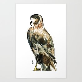 Northern Harrier Art Print