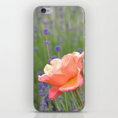 Peach Roses and Lavender Flowers iPhone & iPod Skin