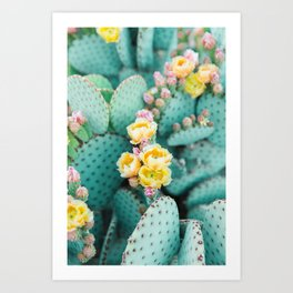 Bunny Ears Prickly Pear Cactus II Art Print