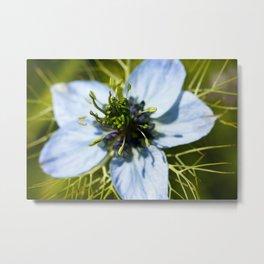 Nigella Flower Metal Print