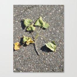 Brotherhood Of Leaves Canvas Print