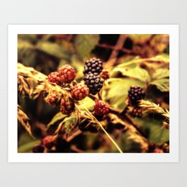 Fruits of the Forest Art Print