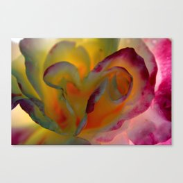 Rose Abstract Canvas Print
