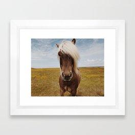 Icelandic Horse #4 Framed Art Print