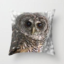 Chaco Owl Throw Pillow