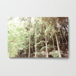 Old forest Metal Print