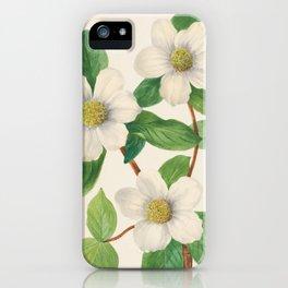 Pacific Dogwood Vintage Botanical Print, Mary Vaux Walcott iPhone Case