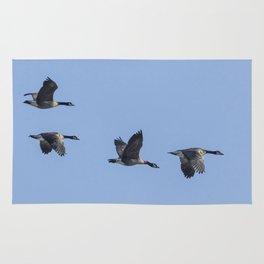 Four Dusky Canada Geese Flying Rug