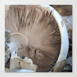 TEXTURES -- Mushroom Uprooted Canvas Print