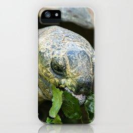 Aldabra Giant Tortoise iPhone Case