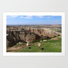 Bighorn Sheep At Sage Creek Art Print