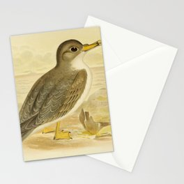 Vintage Print - The Birds of Australia (1890) - Great Grey Petrel Stationery Cards