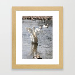 White Duck Flapping Wings on Water Framed Art Print