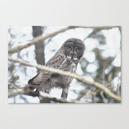 Let Us Prey - Great Grey Owl & Mouse Canvas Print