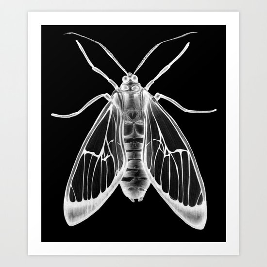 Wasp Moth II Art Print