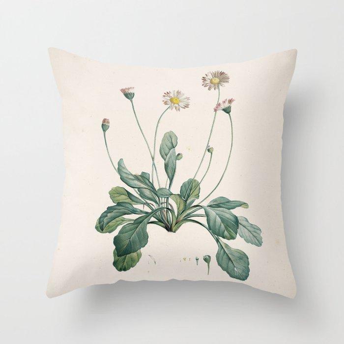 Daisy Flower Botanical Illustration Throw Pillow