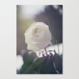 Rosae (6) Canvas Print