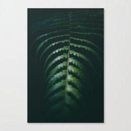 Nature Leaf Canvas Print