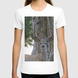 Mule-tail Deer, Buck in Velvet T-shirt